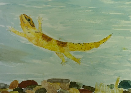 Watercolor – Age 9